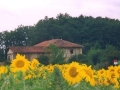 houseandsunflowers